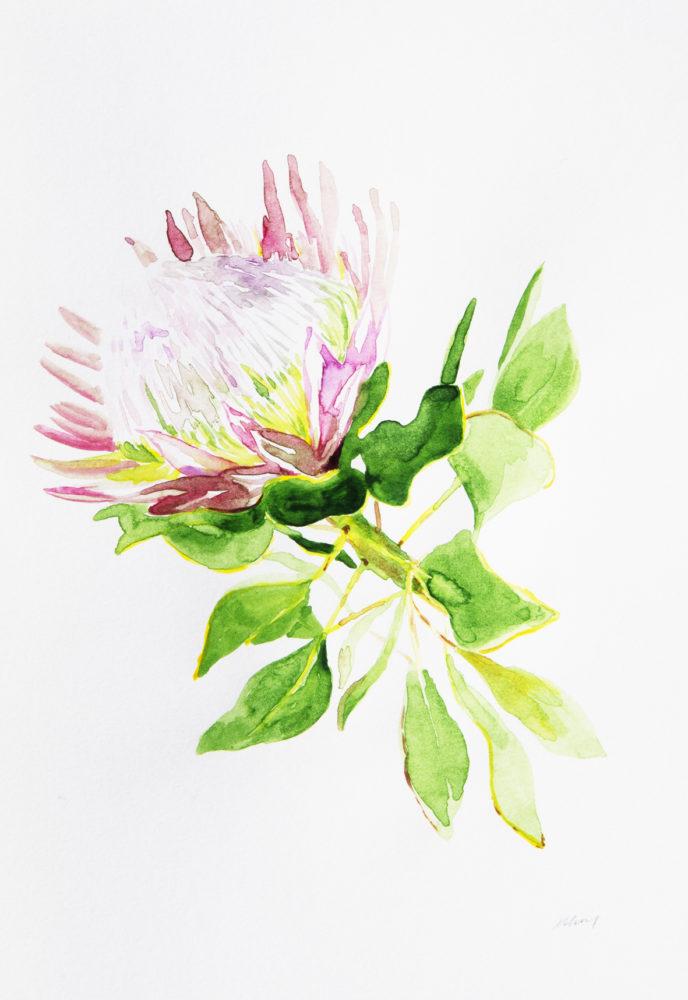 10. Mini Pink Protea